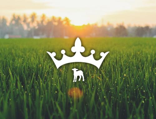 Lamb's Reign
